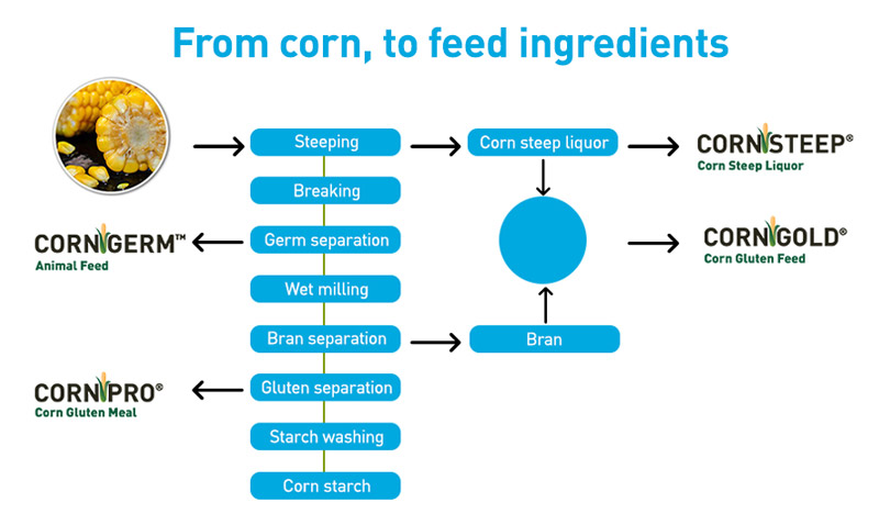 Corn to feed process graph