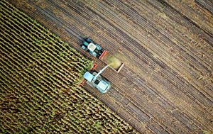 Aerial shot of corn field being harvested